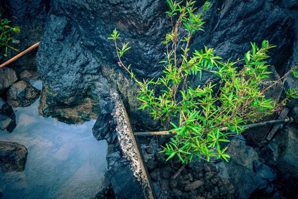 Вьетнам. Далат, Ламдонг. Путешествие к водопаду Датанла. (Lar)