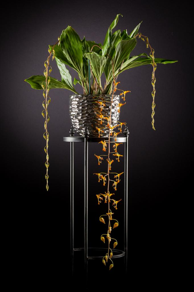 Орхидея Gongora tricolor. (Peter Kemmer)