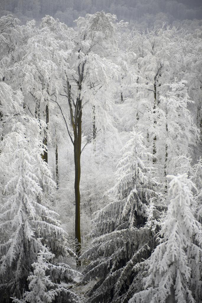 Заснеженный лес. (Florian Kluger)