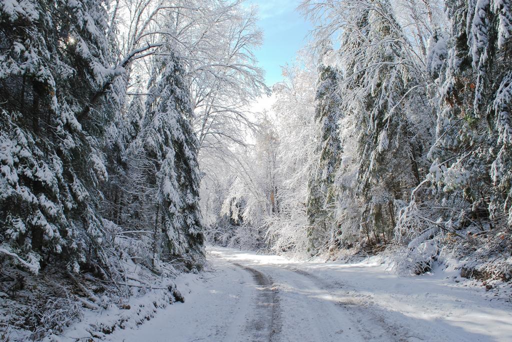Заснеженный лес. (Ted Scodras)
