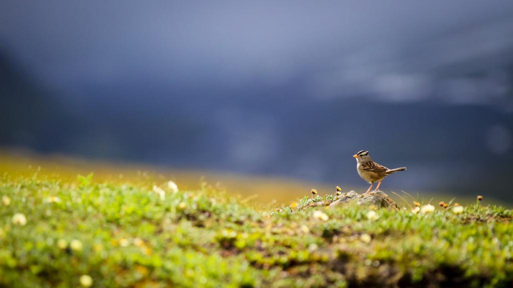 США. Аляска. Прогулка по Национальному парку Денали. (NPS Photo/Alex Vanderstuyf)