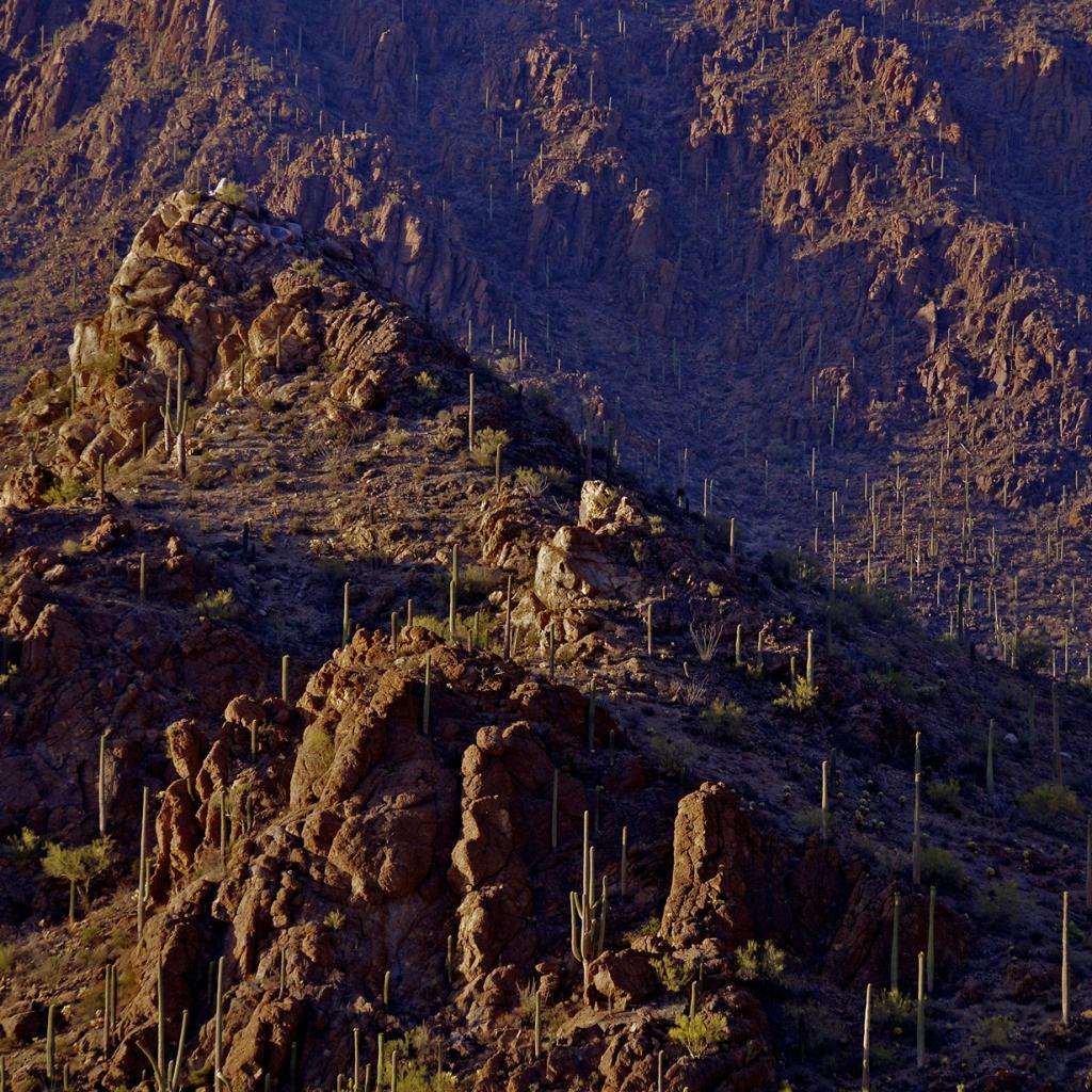США. Аризона. Национальный парк Сагуаро. (David Strom)
