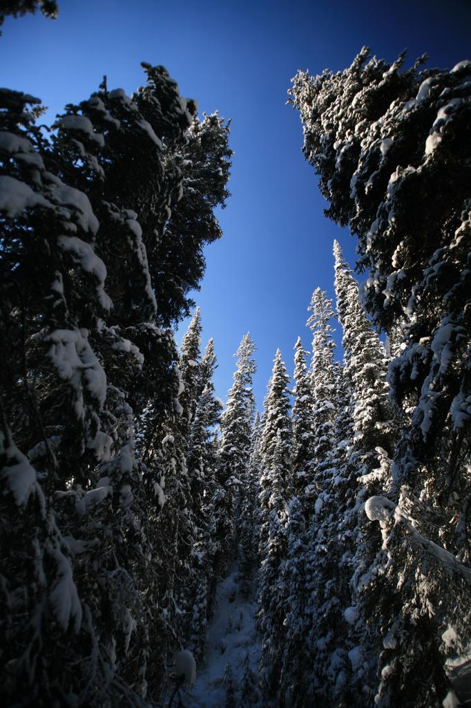 Канада. Альберта. Национальный парк Банф. (LASZLO ILYES)