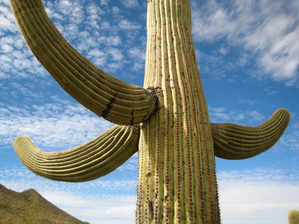 США. Аризона. Национальный парк Сагуаро. (Jon Keegan)