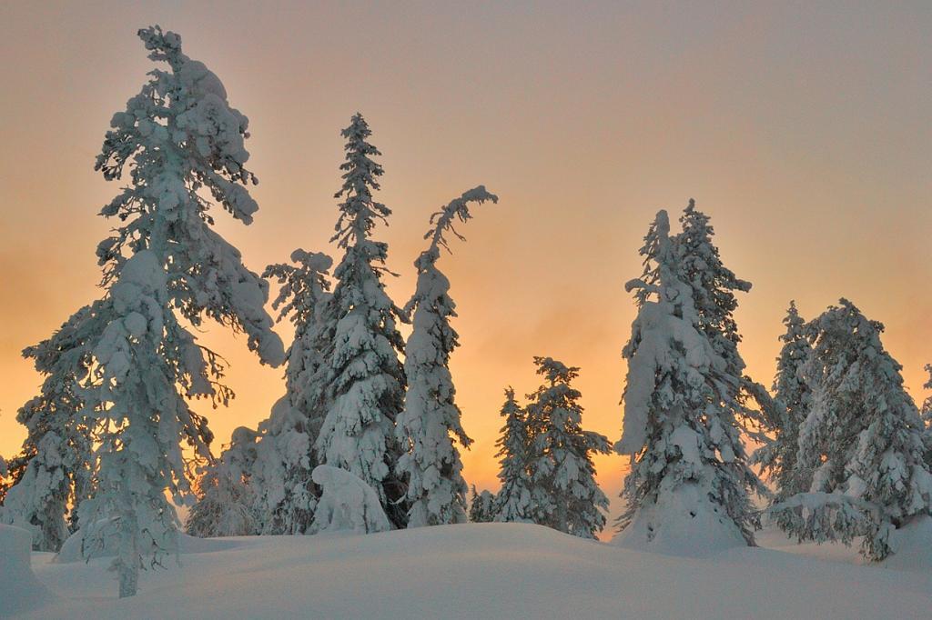 Финляндия. Национальный парк Оуланка. (Rene Jakobson)