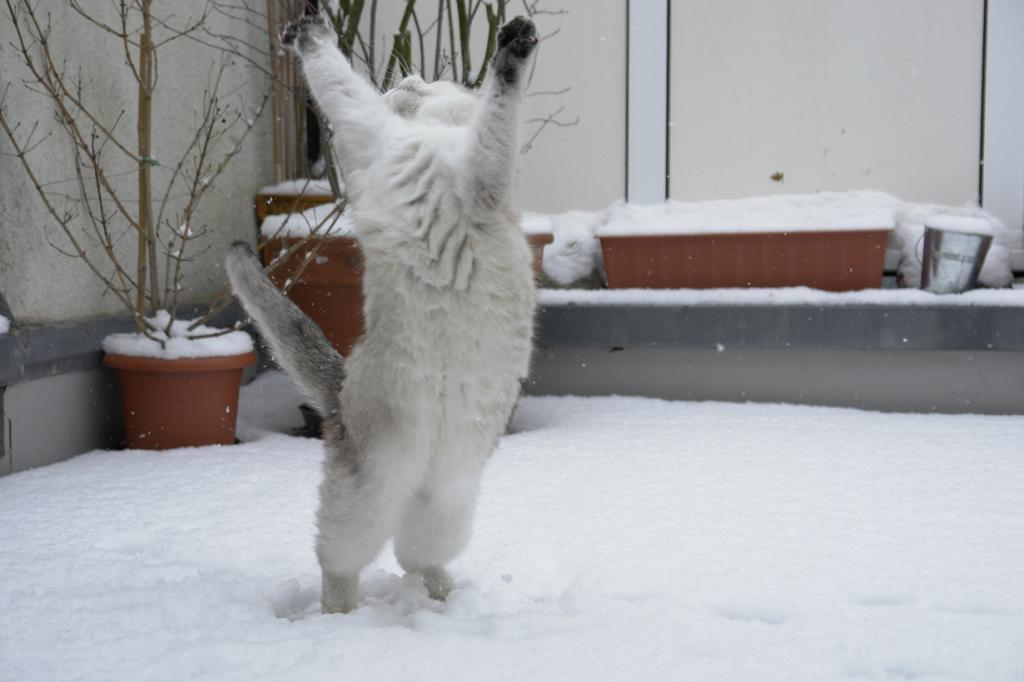 Домашние кошки. (Matthias Zirngibl)