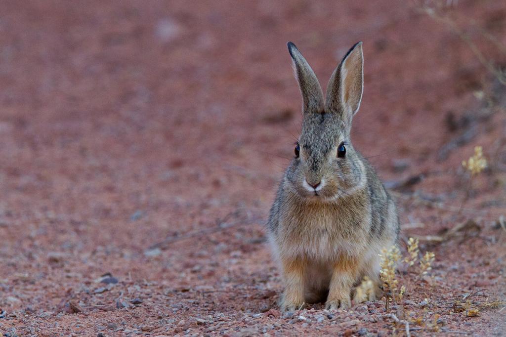 США. Юта. Национальный парк Арки. (Arches National Park/Kait Thomas)