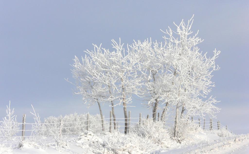 Мороз. (Brad Smith)