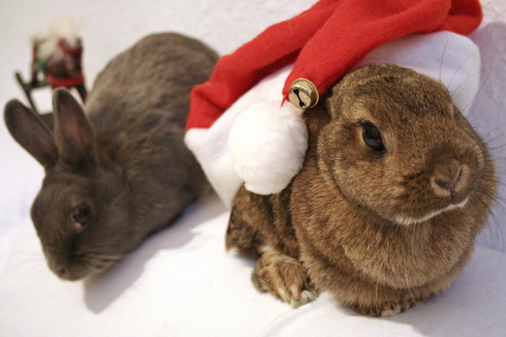 Рождественский период. (Astrid Kopp)