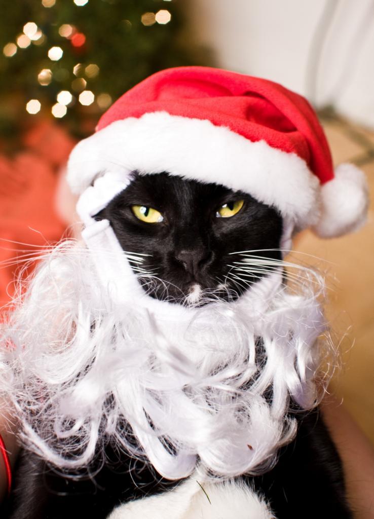 Рождественский период. (Jessica Watkins)