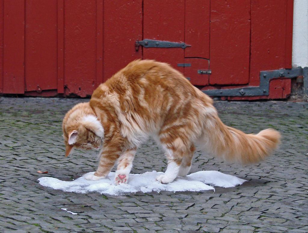 Домашние кошки. (Barbara Müller-Walter)