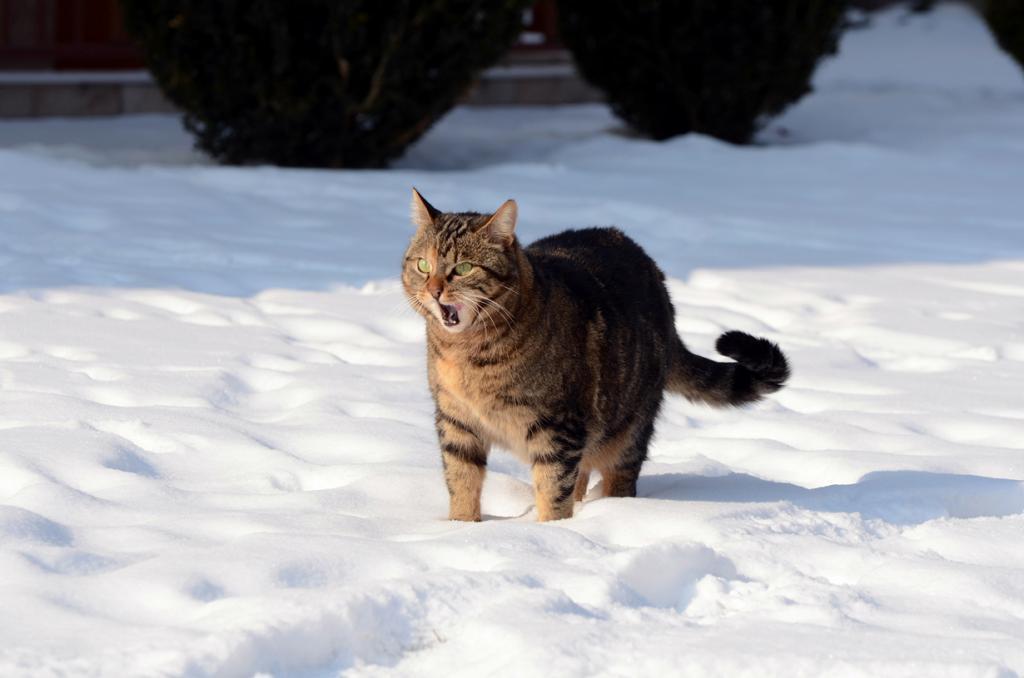 Домашние кошки. (Armin Rodler)