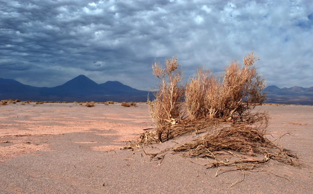 Чили. Пустыня Атакама. (wilth)