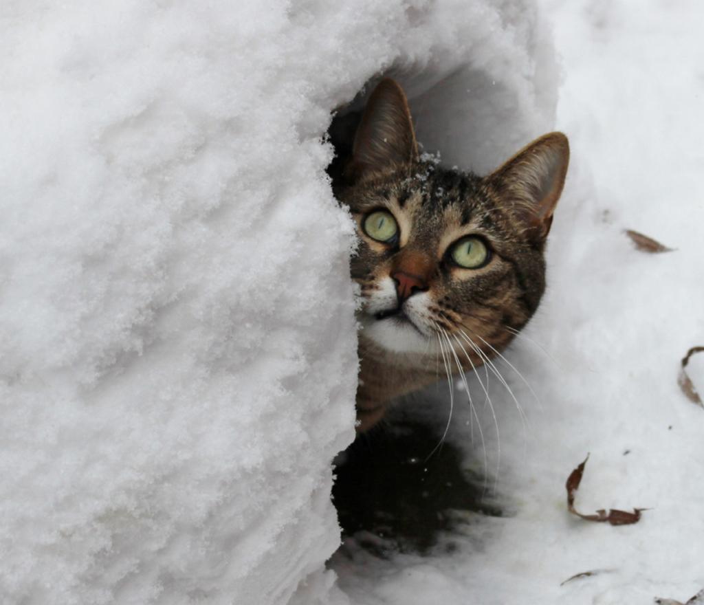 Домашние кошки. (gamppart)