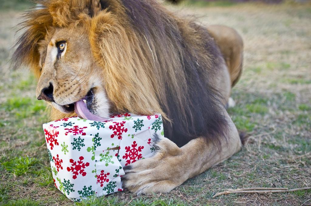 Рождественский период. (Joe Duty)