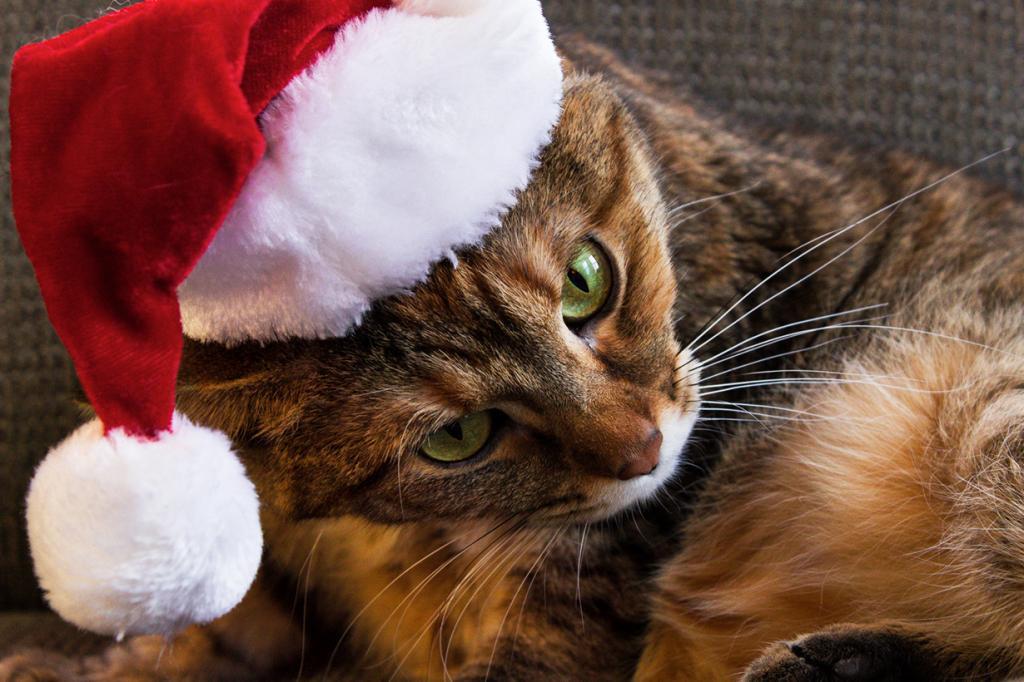 Рождественский период. (John Pemble)