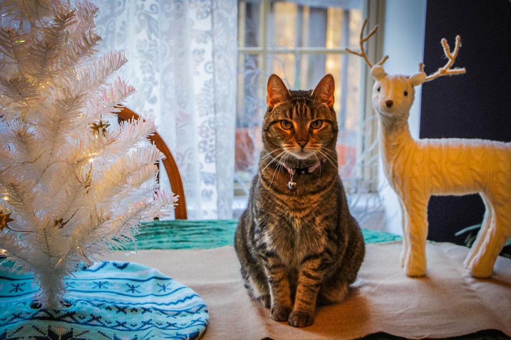 Рождественский период. (Lindley Ashline)