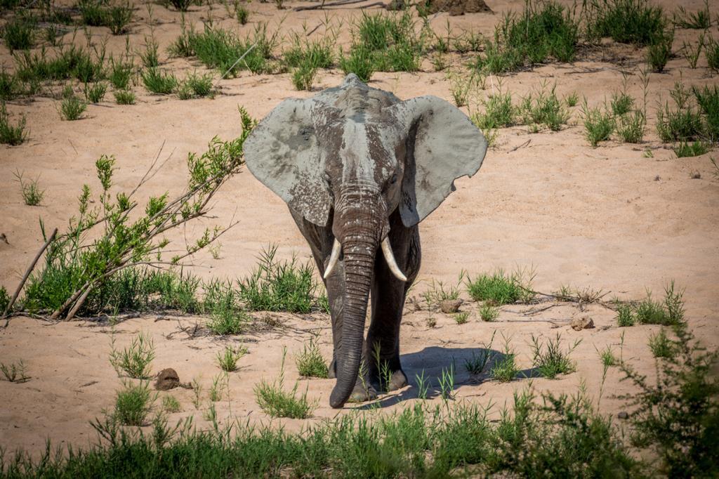 Слон. (Martijn Barendse)