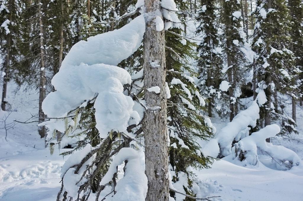 Финляндия. Национальный парк Оуланка. (Globalgrasshopr)