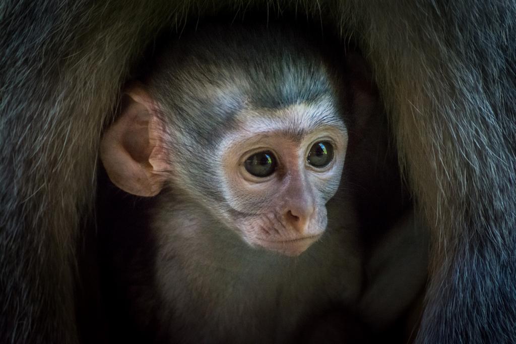 Национальный парк Крюгер. Самый населённый заповедник Африки