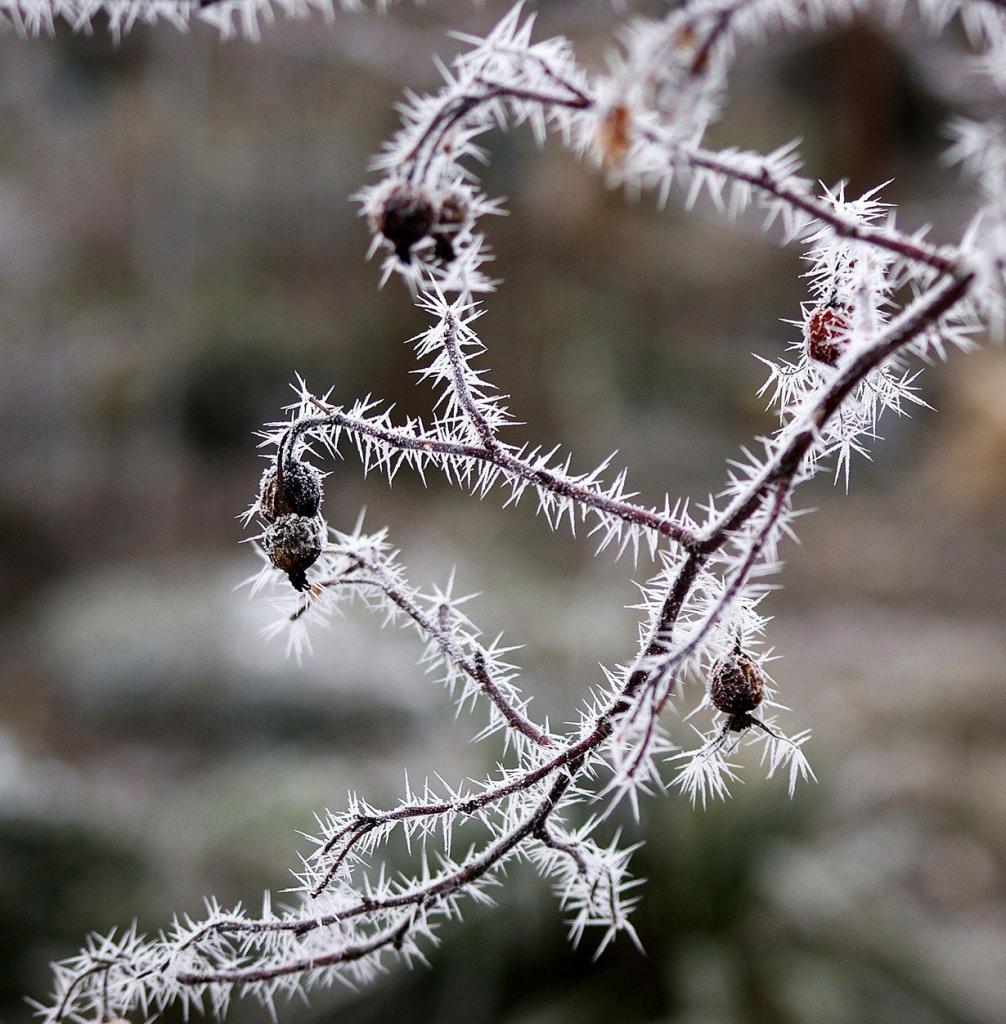Мороз. (ingrid eulenfan)