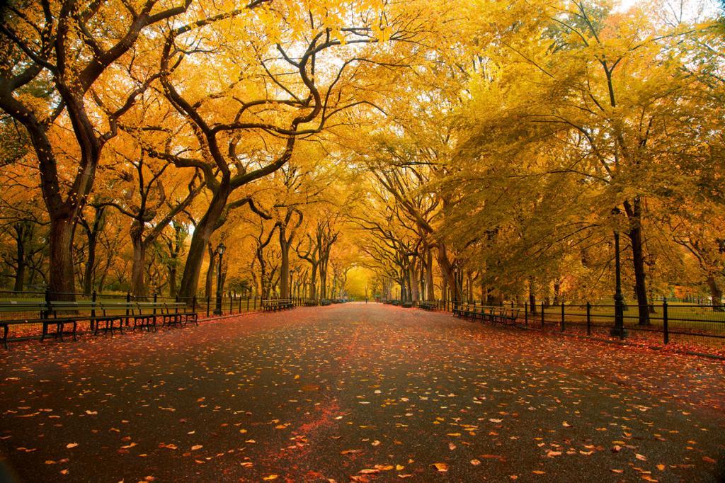 США. Нью-Йорк. Центральный парк. (Chris Ford)