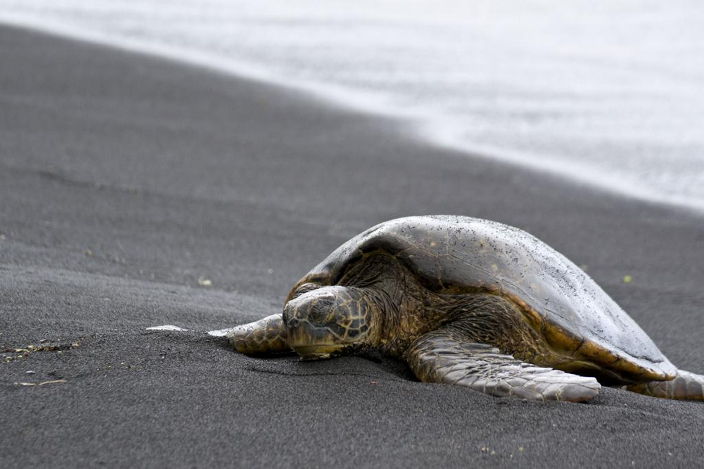 Пляж находится на территории Большого острова, Гавайи. (Djof)
