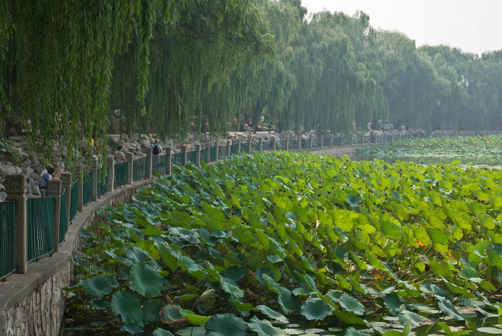 Китай. Пекин. Парк Бэйхай. (David Creswell)