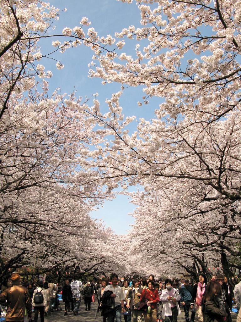 Япония. Токио. Парк Уэно. (鶴野紘之)