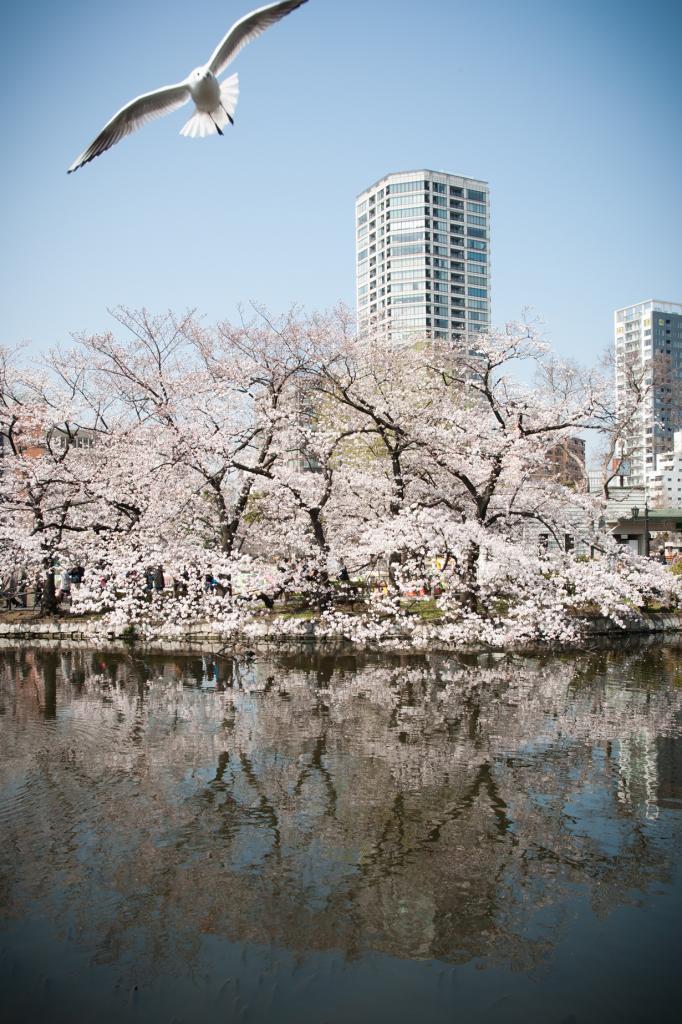 Япония. Токио. Парк Уэно. (Wunkai)