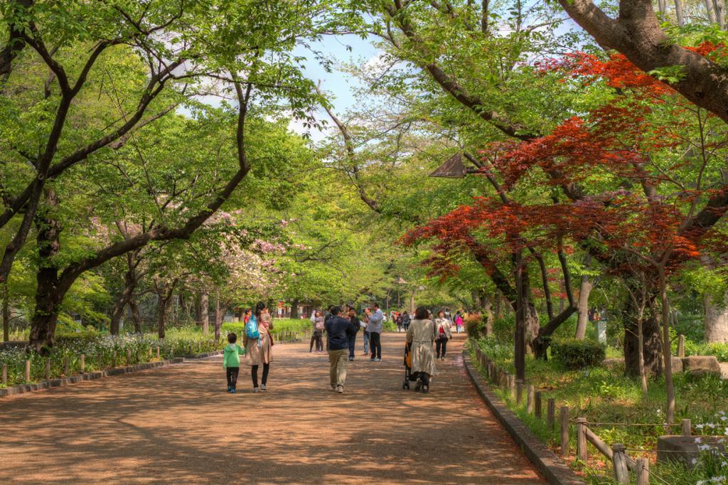 Япония. Токио. Парк Уэно. (Chao-Wei Juan)