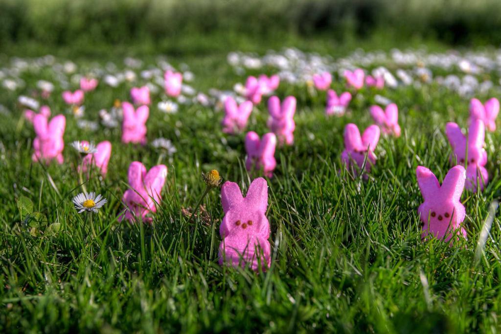 Пасхальный заяц — атрибут Пасхи. Традиция использования образа животного в качестве символа возникла в Германии. Первые упоминания о нем найдены в текстах, датированных XVI веком. В 1680 году вышел рассказ о кролике, откладывающем яйца и прячущем их в саду. (Max Elman)