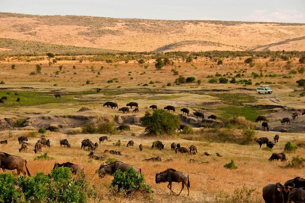 Кения. Масаи-Мара. (Ismael Alonso)