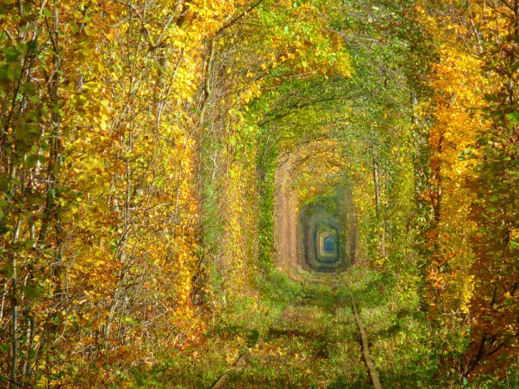Путешествуя по Украине стоит посетить Туннель Любви. Это место идеально подойдёт для влюблённых пар, желающих совершить прогулку и исследовать чудеса природы. Туннель Любви находится близ посёлка Клевань, Ровненская область. (Myroslava Rakovets)