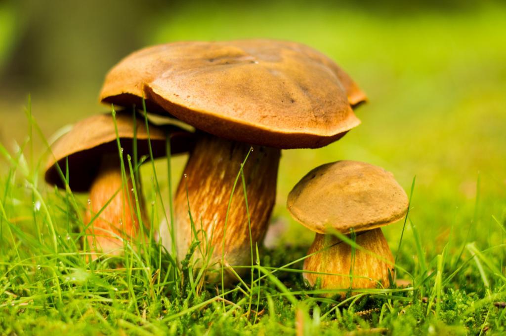 Дикорастущие грибы. Ни для кого не секрет, что грибы способны «впитывать» радиацию. Поэтому перед использованием их необходимо проверить в лаборатории на наличие радионуклидов. Стоит отметить, что особую опасность представляет цезий-137. Длительное употребление непроверенных грибов может привести к онкологическому заболеванию. (darren price)