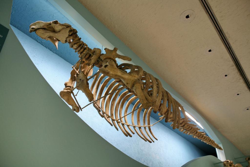 За последние 500 лет из-за человека вымерло 322 вида животных. (Cliff)