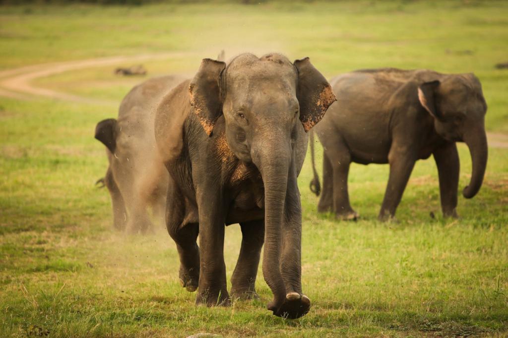 Для незабываемого отдыха на Шри-Ланке достаточно иметь в кармане $40 на день. Здесь туристам предлагаются развлечения на любой вкус — от прогулок по джунглям до времяпровождения на невероятно чистых пляжах или исследования древних храмов. (Tom Olliver)