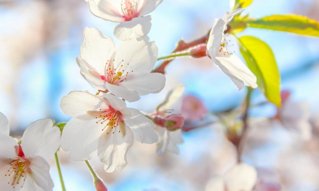 Запах весны. (Artur Chalyj)