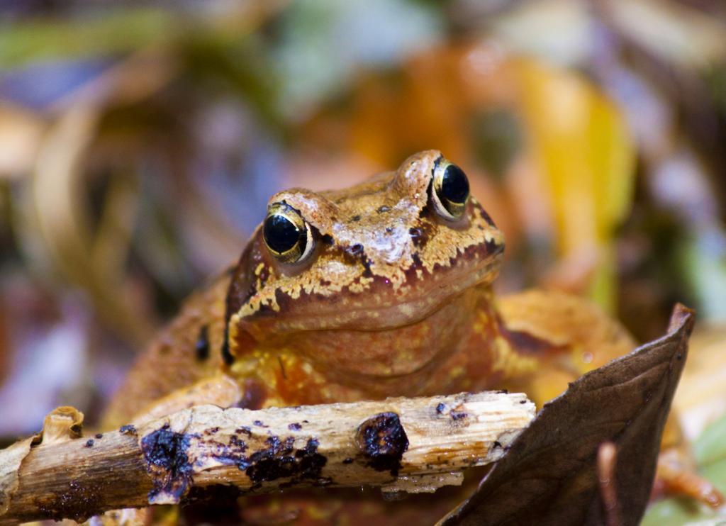Некоторые животные, как, к примеру, древесная лягушка, способны оставаться живыми в замершем виде. При этом у существа останавливается сердце и кровообращение. С потеплением она «оттаивает» и продолжает своё существование как ни в чём не бывало. (Niels van Dijk)