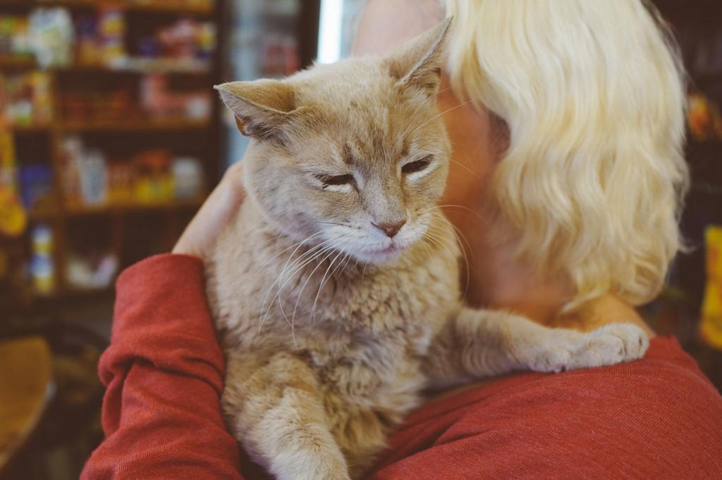 Кот по кличке Стаббс с 1997 года исполняет роль мэра города Талкитна, штат Аляска. (Cody Wellons)