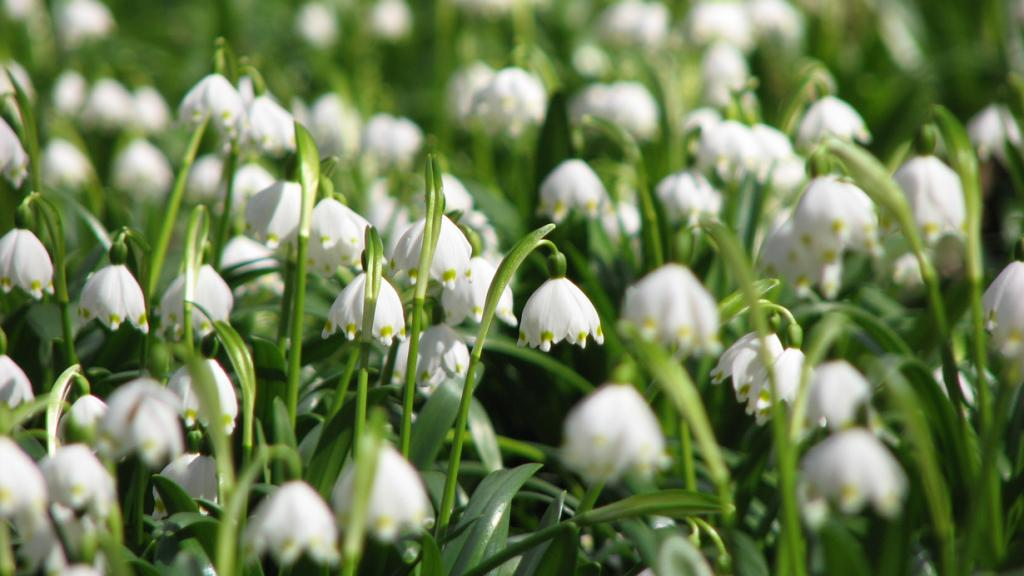 Запах весны. (Cristian Bortes)