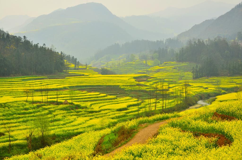 Китай. Люпинг. Рапсовые поля. (Fanghong)