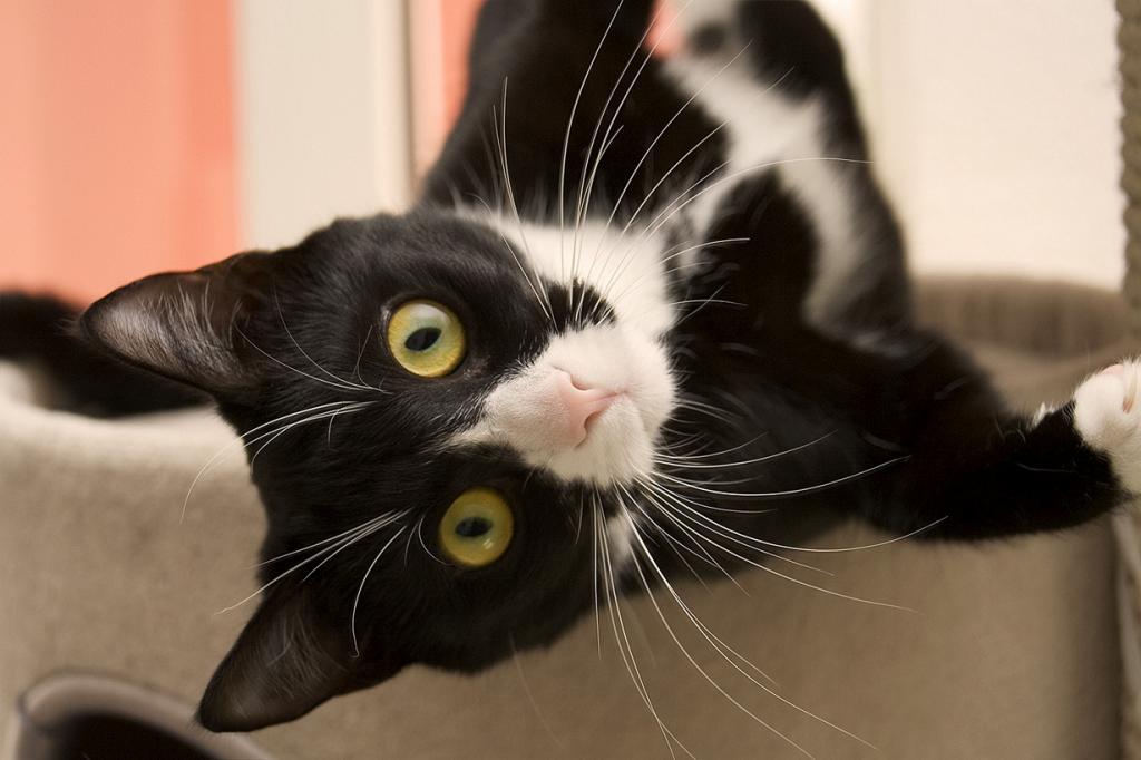 Коты имеют 32 мышцы, контролирующих движение уха, в то время как человек — только 6. (Andreas Levers)