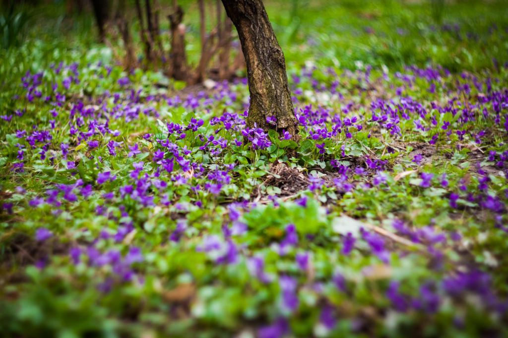 Запах весны. (Sorin Mutu)