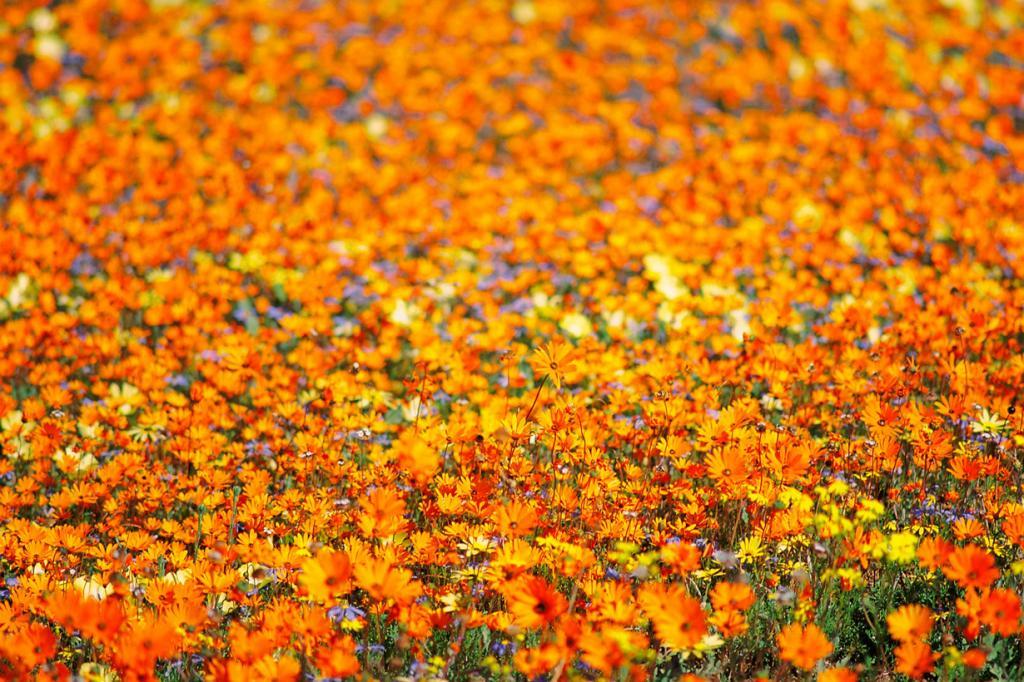 Намибия. Плоскогорье Намакваленд. (Sam Agnew)