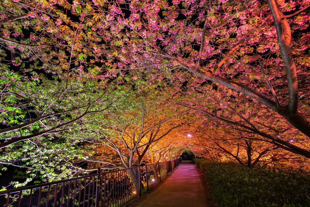 Япония. Кавадзу, Сидзуока. Туннель Любви. (Agustin Rafael Reyes)