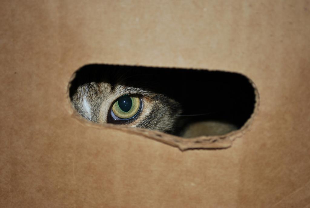 В 1960-х ЦРУ потратило $20 млн на обучение котов в целях шпионажа за русскими. Первый кот-шпион был сбит машиной. (RSPCA WOAW)