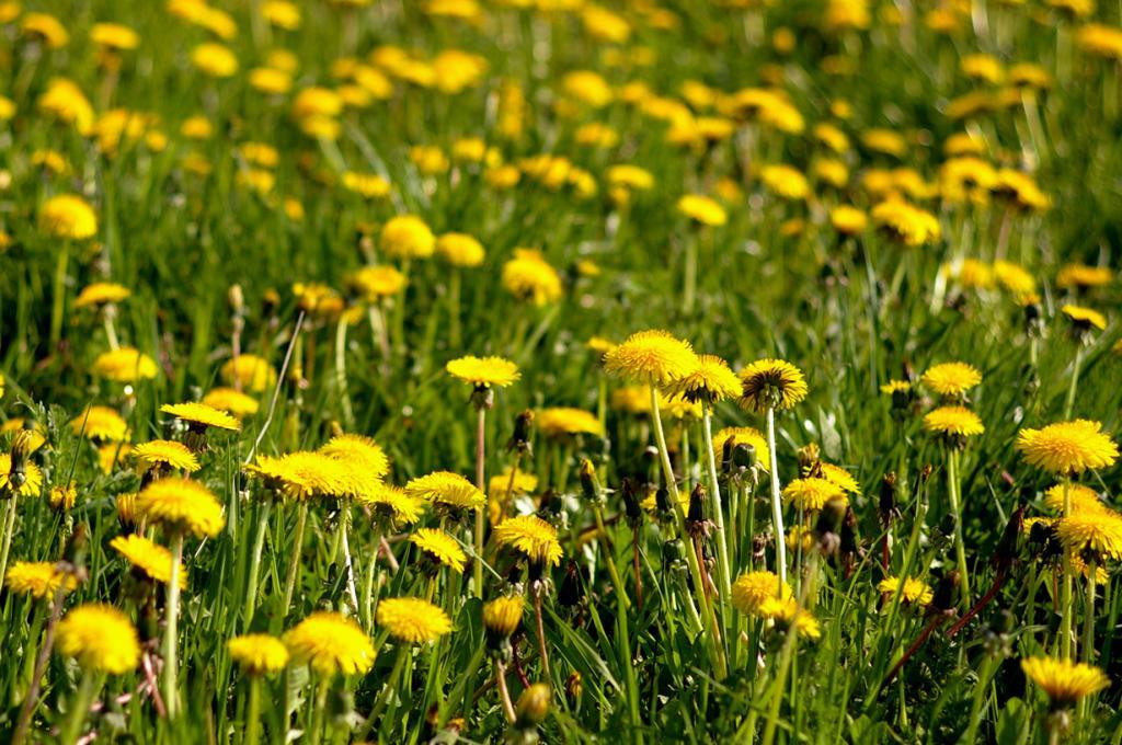 Запах весны. (Marcin Bajer)