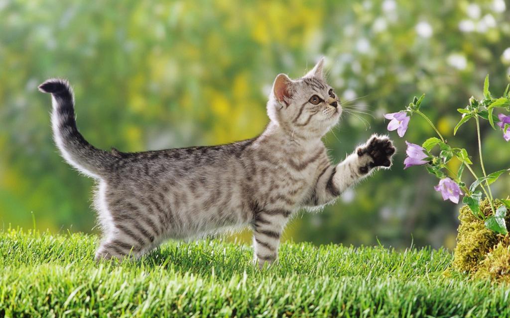 Коты способны распознавать голос хозяина, однако в большинстве случаев предпочитают его игнорировать. (Goneys)