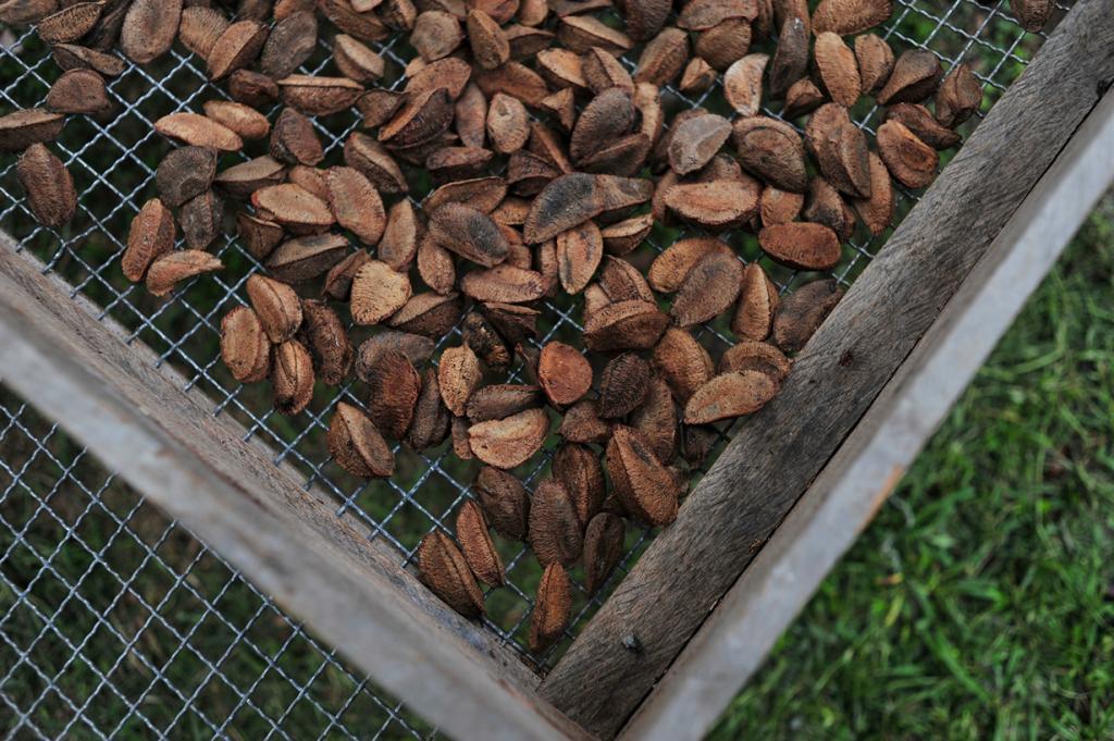 Пожалуй, самым вкусным продуктом из нашего списка является бразильский орех. Он помогает ускорить метаболизм путём преобразования базового гормона щитовидной железы в T3 (активную форму гормона щитовидной железы). Бразильский орех также помогает бороться с целлюлитом и укрепляет иммунную систему. (CIFOR)